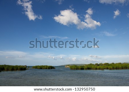 Mangroves growing in the lagoon in the bay of Isla Cebu, Philippines, young mangrove tree (avicenia marina) growing in shallow water with the blue sky background,mangrove trees in the sea and nice sky - stock photo