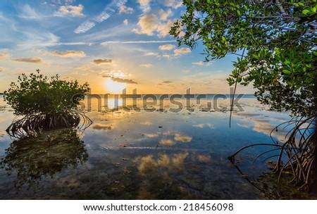 Mangroves line Florida Keys shoreline at sunset - stock photo