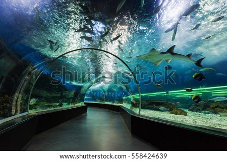 MANILA, PHILIPPINES - MARCH 18: Underwater tunnel on March, 18, 2013, Manila, Philippines. In terms of floor space, oceanarium is larger than oceanarium in Singapore, features a 25-metre tunnel.