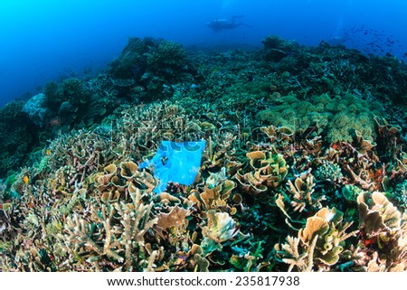 Manmade Pollution - a discarded plastic bags lies entangled on a tropical coral reef while SCUBA divers swim past in the background - stock photo