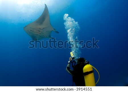 Manta ray with diver, underwaterphotographer - stock photo