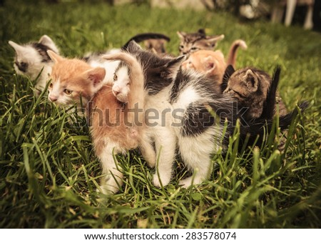 many baby cats standing and playing in the grass