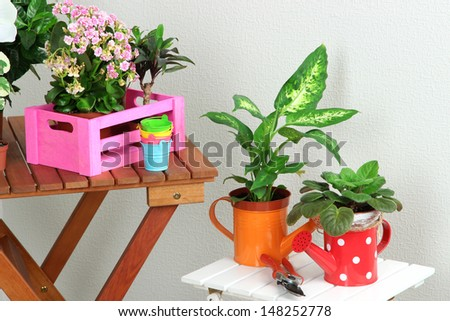 Many beautiful flowers on tables in room