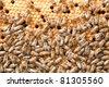 many bees on honeycombs - stock photo