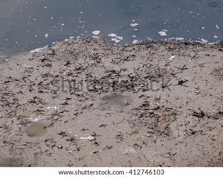 many bird's footprints on brown clay muddy ground earth floor of old shrimp farm pond with warm and dirty water under summer sunlight on a warm weather day