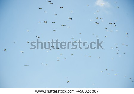 Many birds flying in the blue sky.