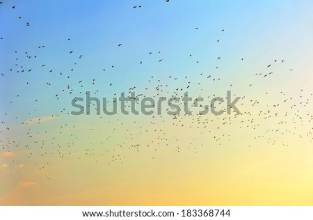 Many birds in sky at sunset - stock photo