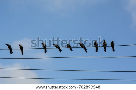 Many birds on the electric wires under blue sky at sunny day.