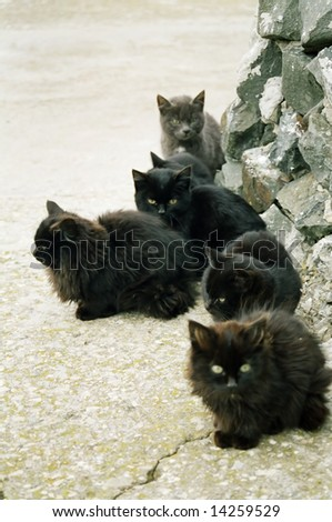 Many black kittens sitting on the ground. - stock photo