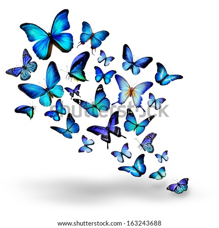 stock-photo-many-blue-different-butterflies-flying-163243688.jpg