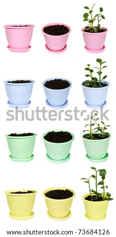 many bright flowerpots with ground and Kalanchoe plants from different viewpoints, isolated - stock photo