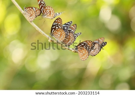 Many butterflies are the branches. - stock photo