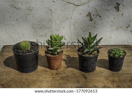Many cactus species in small pots on a wood floor.