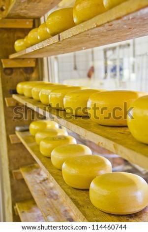 Many cheeses - stock photo