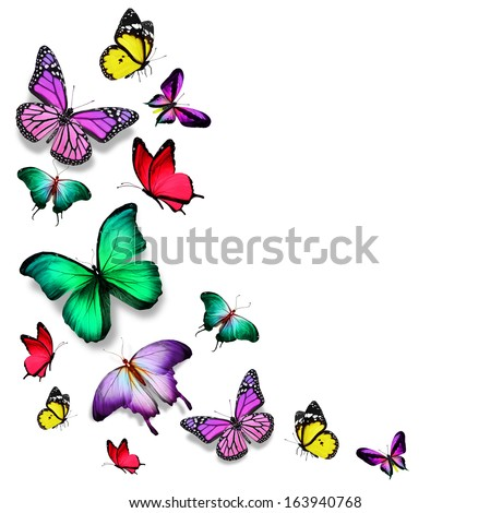 Many color different butterflies flying - stock photo