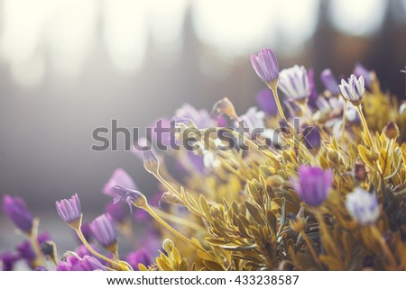 many colorful bright lilac pink flowers and yellow grass on natural background. Outdoor natural vintage macro fresh morning photo