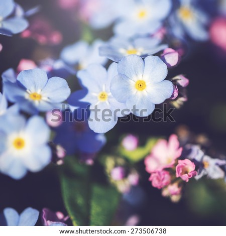 many colorful soft flowers. Nature vintage background  - stock photo