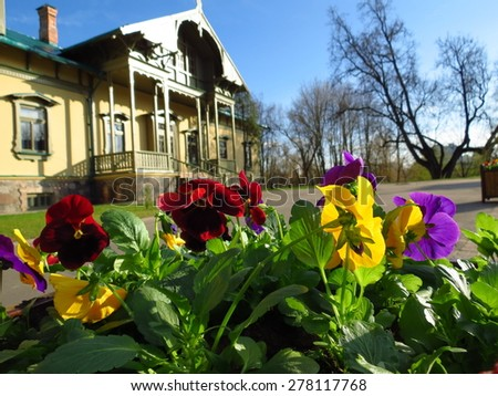 Many colorfull pansies against old-fashioned residential cottage - stock photo