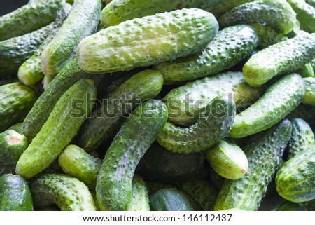 many cucumbers close-up