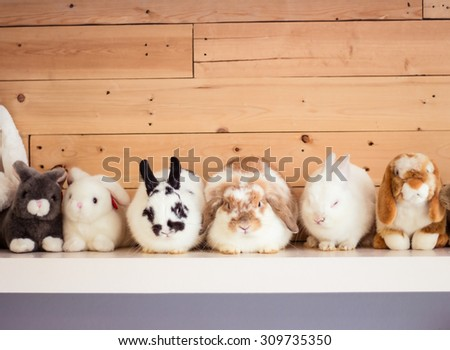 Many cute bunny rabbit and rabbit doll on shelf. - stock photo