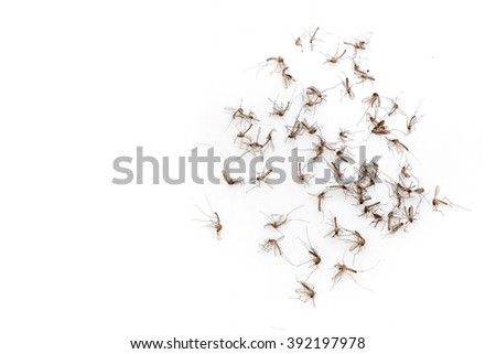 Many dead mosquitoes on white background isolated - stock photo