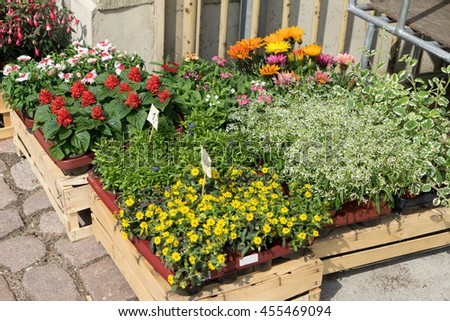 many different Flowers in front of a flower shop - stock photo