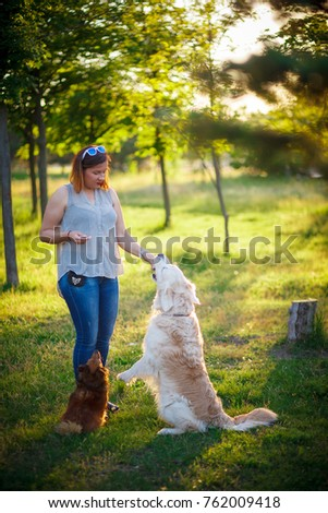 Many dogs walk in the park. Girl playing with dogs