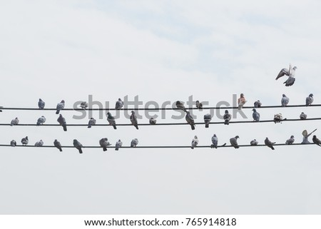 Many doves are clutch on a cable line with a beautiful sky image is background. Birds clutch on cable line. Minimal concept.