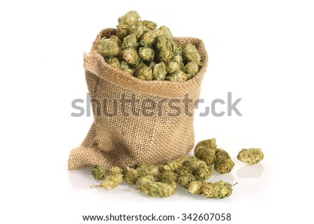 many dried hops for beer and brewery in a gunnysack - stock photo