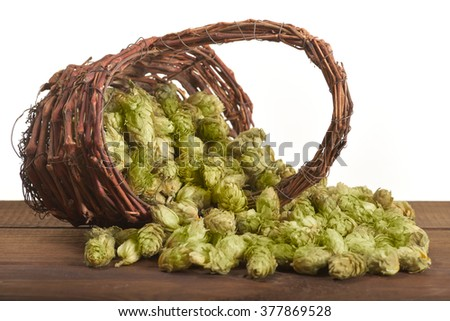 many dried hops for beer and brewery in rattan basket isolated on white