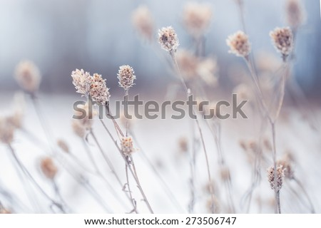 many dry meadow flowers in winter field. Nature background