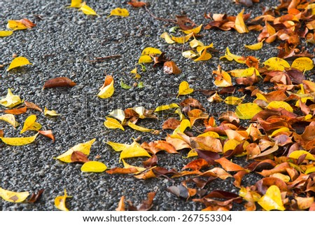 Many fall leaves on wet asphalt road in rainy day