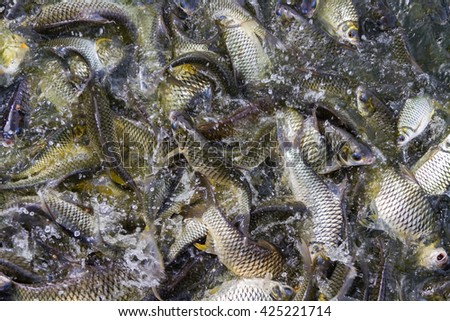 Many fish as food The popular - stock photo