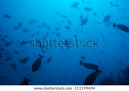 many fish in bodies of tropical water