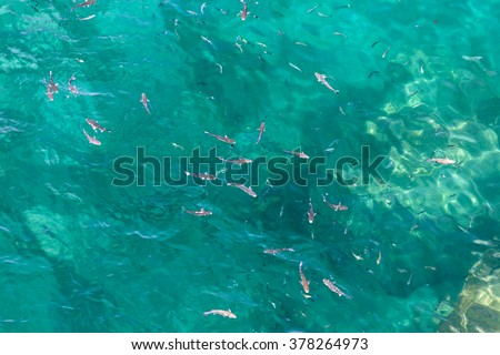 Many fish on the beautiful water surface. Top view of the Alboran Sea in the Strait of Gibraltar.