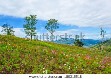 Many flower in the mountain