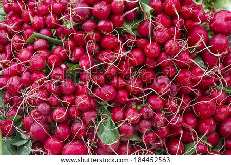 Many fresh red radishes in a pile