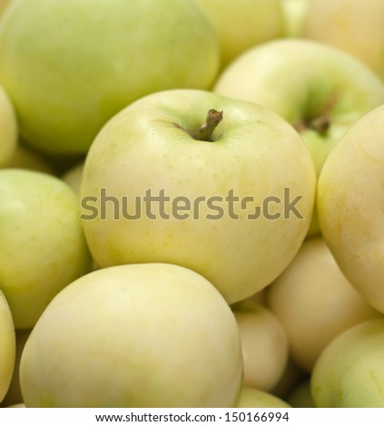 "Many fresh ripe green apples ""Early Gold"""
