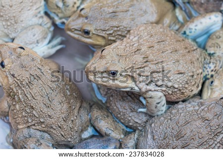 Many frogs in the market background - stock photo
