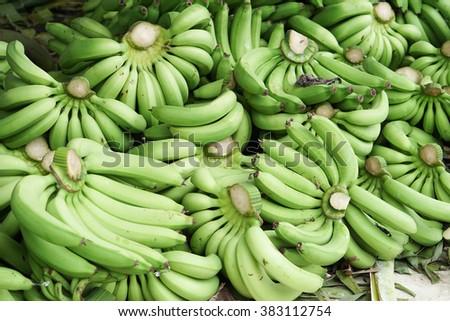 many green bananas. - stock photo