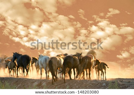 Many horses run at summer evening against cloudy sky. Shallow DOF - stock photo