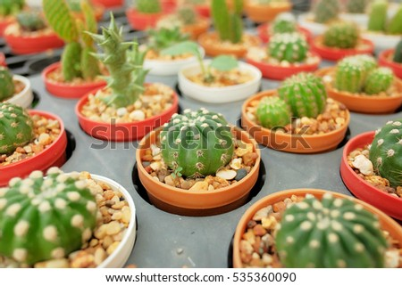 Many kinds of colorful cactus, the unique style of living trees very popular plant at home or decorate the office or place on working table for beauty and keep the working environment