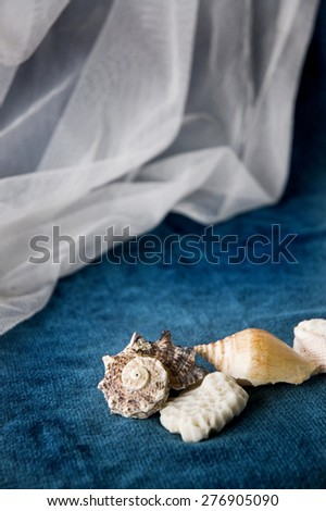 many kinds of seashell on blue and white background - stock photo