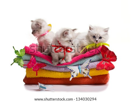 many kittens and colourful  butterflys on stack of colorful towels on isolated on white - stock photo