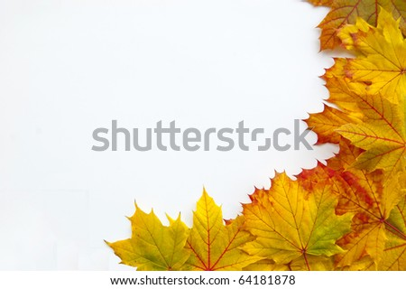 Many leaves on a white background make a frame