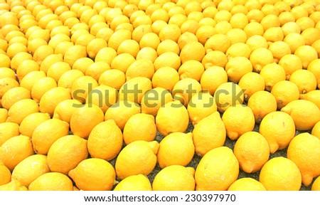 Many lemons - stock photo
