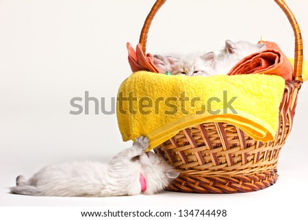 many little furry kittens in basket lying on towels and one kitten lying near basket on white - stock photo