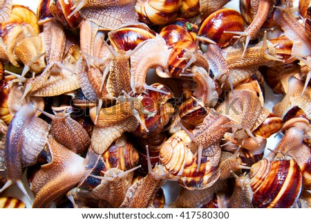 many live snails creep the friend on the friend - stock photo