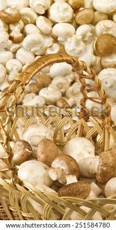 many mushrooms - stock photo