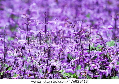 Many of small purple and white flowers blooming in flower garden
